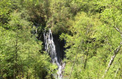 乗鞍の自然を満喫できる五色ヶ原の森