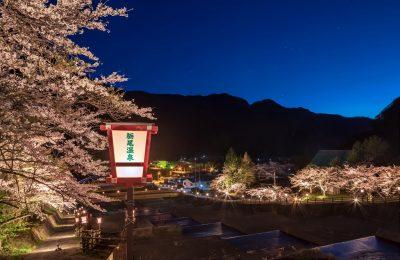 【奥飛騨温泉郷】栃尾温泉桜ライトアップ