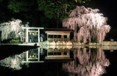 2021年飛騨あさひ桜ライトアップ