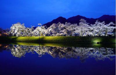 飛騨市【御所桜】ライトアップ