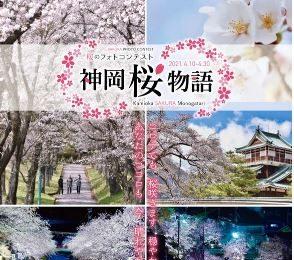 飛騨市【神岡桜物語】開催!