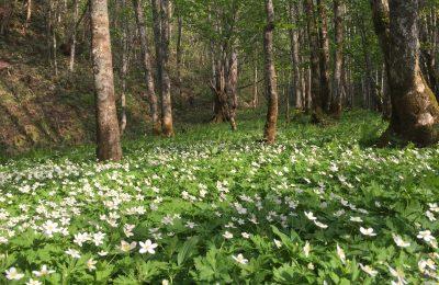 巨木と可憐な春の花に会いに行く