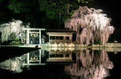 飛騨あさひ桜めぐり2019